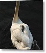 Birds Of A Feather Stick Together Metal Print by Bob Christopher