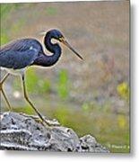 Birds Of Cutler Bay Wetlands 47 Metal Print