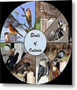 Birds Of Ontario Metal Print