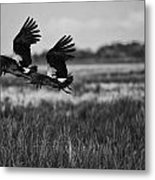 Birds Of The Wetlands V12 Metal Print