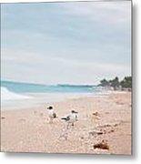 Birds On The Beach 0006 Metal Print