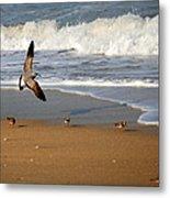 Birds On The Beach Metal Print