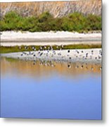 Birds On The River Bank Metal Print