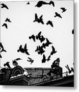 Birds Over City - Featured 3 Metal Print
