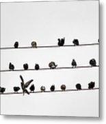 Birds Pattern Metal Print