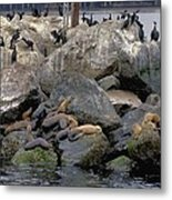 Birds Seals And Sea Lions Metal Print