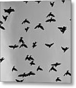 Birds That Knew Metal Print