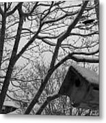 Birds Winter 1 Metal Print