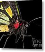 Birdwing Butterfly Metal Print