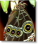 Birth Of A Butterfly Metal Print