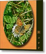 Birthday Greeting Card - American Copper Butterfly Metal Print