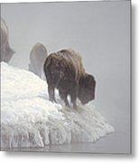 Bison Along Snowy Riverbank Yellowstone Metal Print