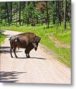 Bison Blocking The Road Metal Print