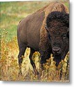 Bison Buffalo Metal Print