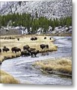 Bison By The Madison Metal Print