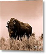 Bison Cow On An Overlook In Yellowstone National Park Sepia Metal Print