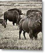 Bison Herd Bw Metal Print