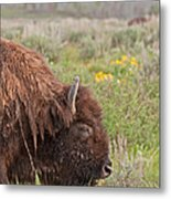 Bison In The Flowers Ingrand Teton National Park Metal Print