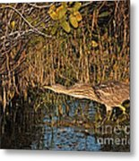 Bittern Stretched Out Metal Print