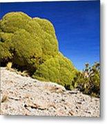 Bizarre Green Plant Bolivia Metal Print