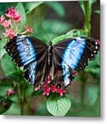 Black and Blue Wings Metal Print