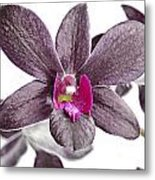 Black And Purple Orchid Metal Print