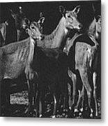 Black And White Antelopes Metal Print