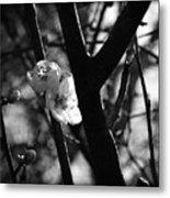 Black And White Appleblossom Metal Print