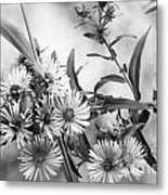 Black And White Asters Metal Print