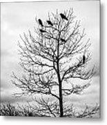 Black And White Blackbirds  Metal Print
