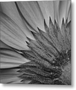 Black And White Blossom Metal Print