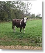Black And White Bull Metal Print