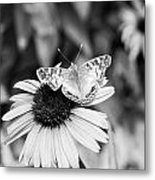 Black And White Butterfly Metal Print by Debbie Sikes