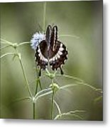 Black And White Butterfly V2 Metal Print