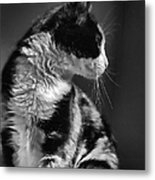 Black And White Cat In Profile  Metal Print
