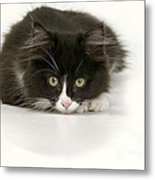 Black-and-white Cat Metal Print