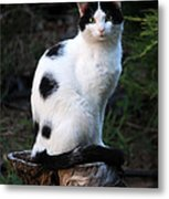 Black And White Cat On Tree Stump Metal Print