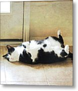 Black And White Cat Reclining Metal Print