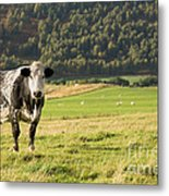 Black And White Cow Metal Print