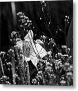 Black And White Daffodil Metal Print