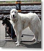 Black And White Dogs 5d25873 Metal Print by Wingsdomain Art and Photography