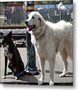 Black And White Dogs 5d25875 Metal Print by Wingsdomain Art and Photography