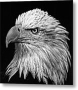 Black And White Eagle Metal Print
