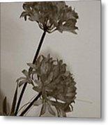 black and white Flower Metal Print