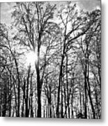 Black And White Forest Metal Print