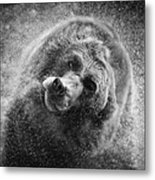 Black And White Grizzly Metal Print