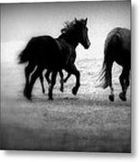 Black And White Horses Metal Print