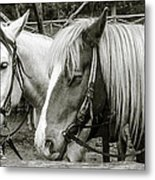 Black And White Horses. Metal Print