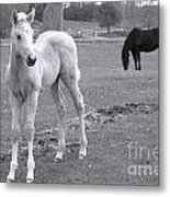 Black And White In Black And White Metal Print