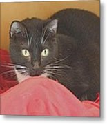Black And White Kitty At Pet Helpers Metal Print